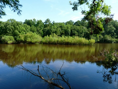 Bates Old River (Friends of Congaree Swamp)