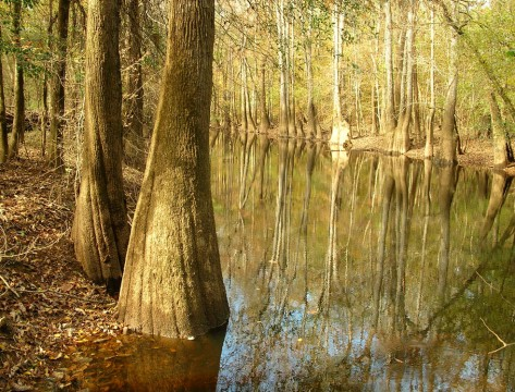 Cedar Creek ( Ron Ahle)
