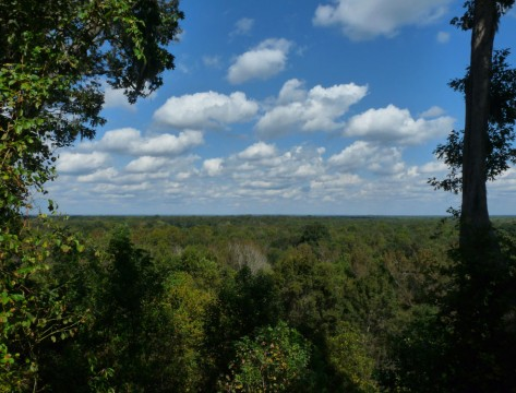 Congaree Bluffs (Friends of Congaree Swamp)