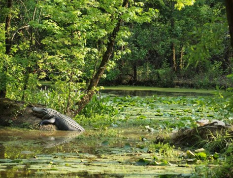 Congaree Creek Heritage Preserve (Hunter Desportes)
