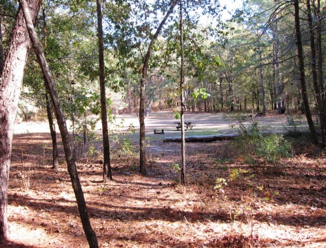 Congaree National Park Bluff Primitive Campground