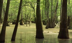 Congaree National Park Kingsnake Trail (Hunter-Desportes)