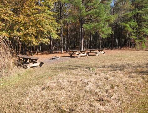 Longleaf Campground (Gerrit Jobsis)