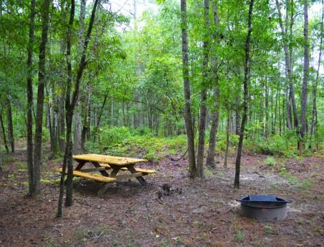 Longleaf Campground (National Park Service)