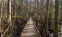 Congaree National Park Weston Lake Trail Miguel Vieira
