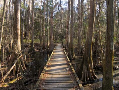 Congaree National Park Weston Lake Trail Miguel Vieira