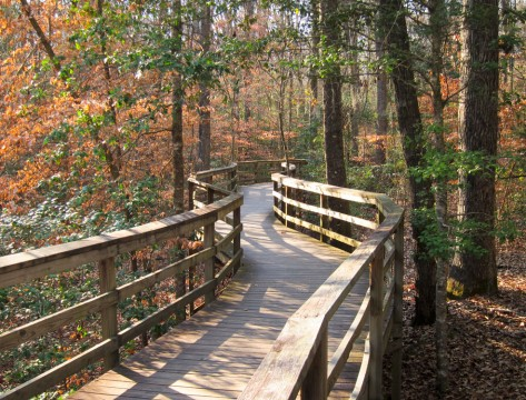Congaree National Park Boardwalk Trail (MiguelVieira)