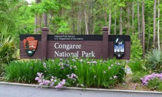 Congaree National Park (NPS)