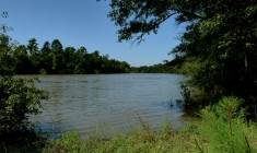 McCord's Ferry (Friends of Congaree Swamp)