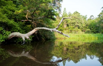 Ashley Scenic River | Credit: South Carolina Dept. of Natural Resources