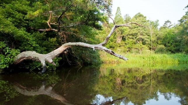 Sc Dept Of Natural Resources Charleston