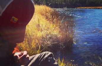 madison river, wy - Yellowstone National Park, Fay Augustyn