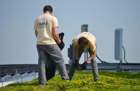 CNT creative commons green roof maintenance